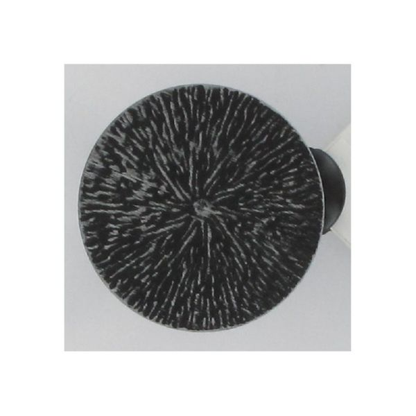 Pinza de metal dos unidades en color negro oplata